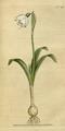 The Botanical Magazine, Plate 46 (Volume 2, 1788).png