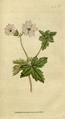 The Botanical Magazine, Plate 55 (Volume 2, 1788).png