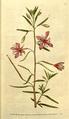 The Botanical Magazine, Plate 76 (Volume 3, 1790).png