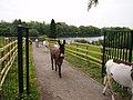The Elizabeth Svendsen Trust for Children and Donkeys - geograph.org.uk - 1729035.jpg