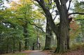 The Italiaanseweg is famous because if its giant old trees - panoramio.jpg