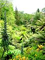 The Last Gardens of Heligan.jpg