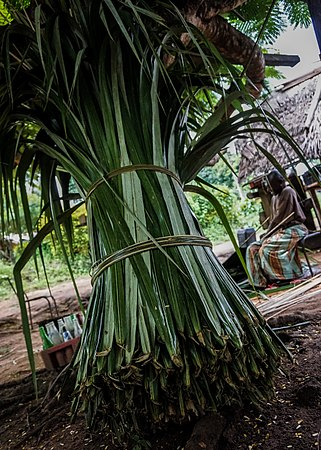 Bike Shop Palm Beach Lakes Blvd