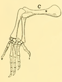 The Osteology of the Reptiles-191 kijhghg kjhgv t.png
