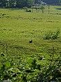 The Sleepy Rabbit - geograph.org.uk - 455590.jpg