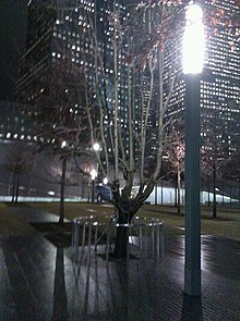 Leafless city tree at night, with street light in foreground