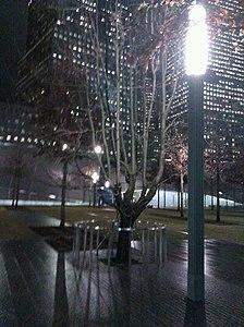 The Survivor Tree at the National September 11 Memorial.jpg