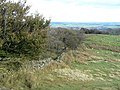 The edge of Burbage Edge Plantation - geograph.org.uk - 1518937.jpg