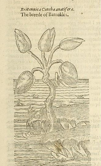John Gerard - Image: The herball, or, Generall historie of plantes (Page (1391)
