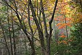 Thousand Step Trail (4) (30558118612).jpg