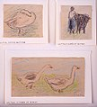 Three Sketches-Two Geese Walking; Peasant Woman with a Cow; Goose Hiding its Head MET sf-rlc-1975-1-727.jpeg