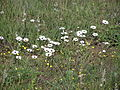 Tienie Versfeld Wildflower Reserve-P9210015.jpg