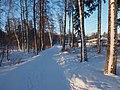 Toppelundinpuisto in winter.jpg
