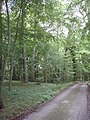 Track through beech woods to Solinger House - geograph.org.uk - 229662.jpg