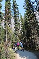 Trail to Awesome Takakkaw Falls IMG 4709.JPG