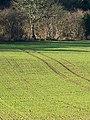 Tramlines near Tincleton - geograph.org.uk - 1636692.jpg