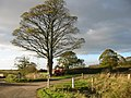 Tree, Harvester and Storm Cloud - geograph.org.uk - 79346.jpg