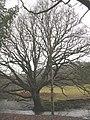 Tree by the Afon Dulas - geograph.org.uk - 1064146.jpg