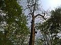 Tree inside forest.jpg