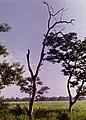 Tree solitary.jpg