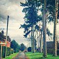 Trees - panoramio (77).jpg