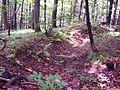 Trench in Bieszczady cm01.jpg