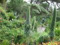 Tresco Abbey Garden - Tropical vegetation.png