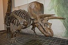 playskool kota my triceratops dinosaur manual