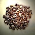 Trichosanthes kirilowii seeds.jpg