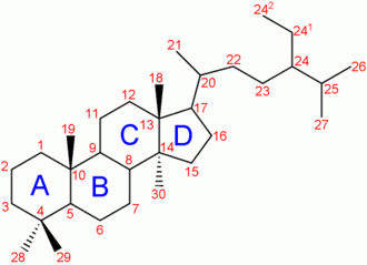 Steroid 11β-hydroxylase - Image: Trimethyl steroid nomenclature
