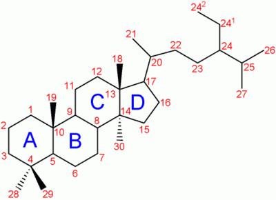 steroid hormone principal pathways
