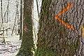 Trois chevrons orange cloisonnement exploitation 02.jpg