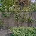 Tuinmuur met latwerk en leiboom - Voorschoten - 20406361 - RCE.jpg