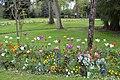 Tulipes en fleur au Jardin Massey de Tarbes 04.jpg