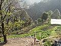 Turner Organic Farm (5274396528).jpg