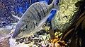 Two Oceans Aquarium July 2018 19.jpg
