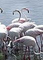 Two flamingo friends.jpg