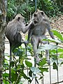 Ubud Monkey Forest 04.jpg