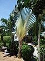 Unbek palme 001.jpg