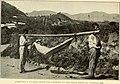 Uncinariasis (Hookworm disease) in Porto Rico - a medical and economic problem (1911) (14802495043).jpg