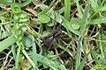Unid. Spider (BG) (13991276589).jpg