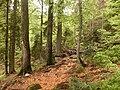 Urwaldgebiet um den Rachelsee.jpg