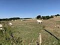 Vaches Pré Route Sauzey Bey Ain 1.jpg