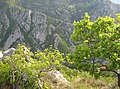Val Rosandra - panoramio.jpg