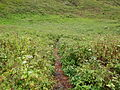 Valley of Flowers 41.JPG