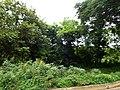 Vegetación, Rincón de Guayabitos - panoramio (1).jpg