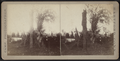 View of a downed tree, by Camp, D. S. (Daniel S.) 2.png