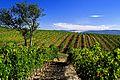 Vignes de Valvignères.jpg