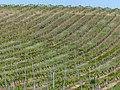 Vineyards (35473706062).jpg