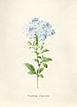 Vintage Flower illustration by Pierre-Joseph Redouté, digitally enhanced by rawpixel 09.jpg